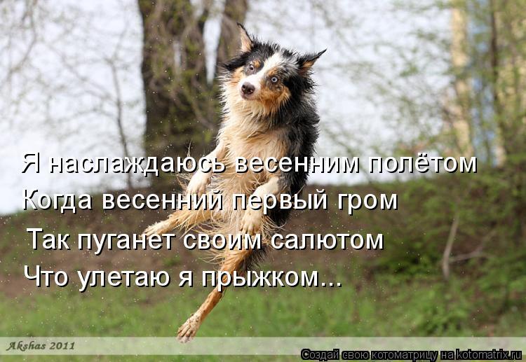 Котоматрица: Я наслаждаюсь весенним полётом Когда весенний первый гром Так пуганет своим салютом Что улетаю я прыжком...