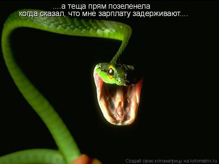 Котоматрица: ....а теща прям позеленела когда сказал, что мне зарплату задерживают.... когда сказал, что мне зарплату задерживают....