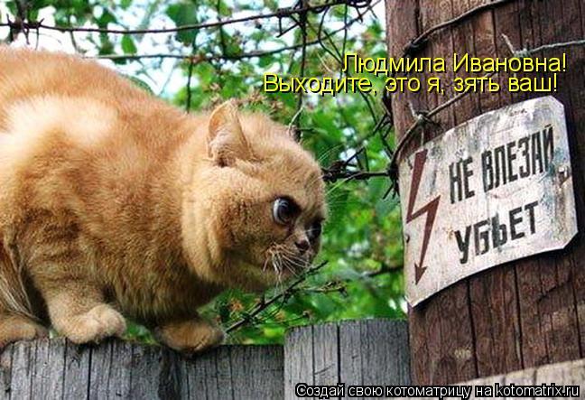 Котоматрица: Людмила Ивановна! Выходите, это я, зять ваш!