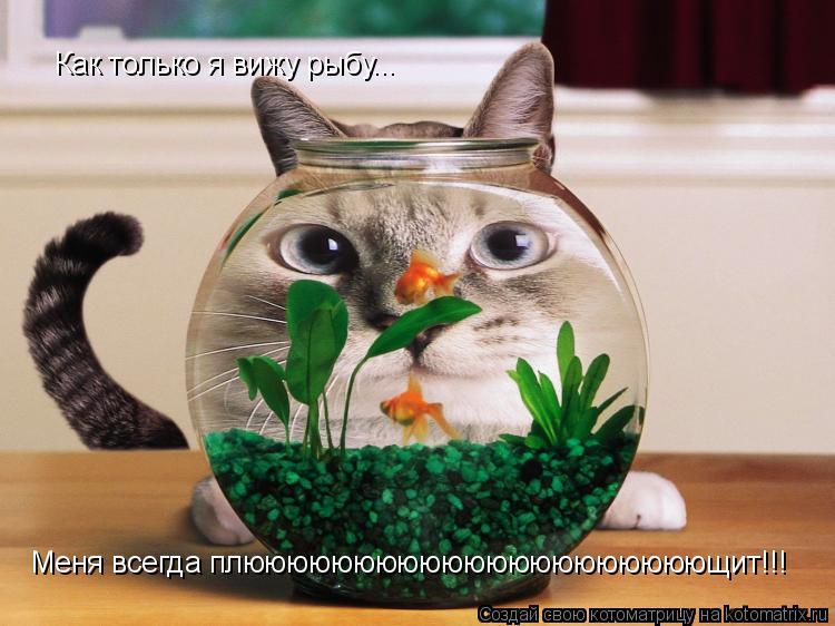 Котоматрица: Как только я вижу рыбу... Меня всегда плююююююююююююююююююююющит!!!