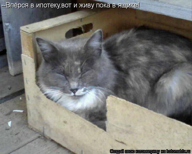 Котоматрица: --Впёрся в ипотеку,вот и живу пока в ящике!