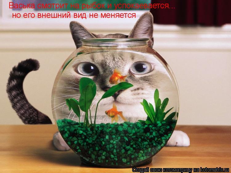 Котоматрица: но его внешний вид не меняется Васька смотрит на рыбок и успокаевается...