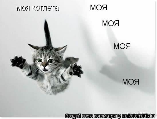 Котоматрица: моя котлета МОЯ МОЯ МОЯ МОЯ