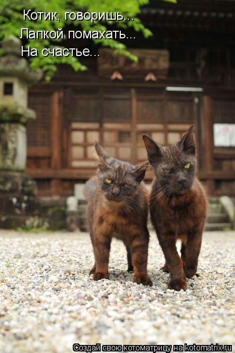 Котоматрица: Котик, говоришь... Лапкой помахать... На счастье...