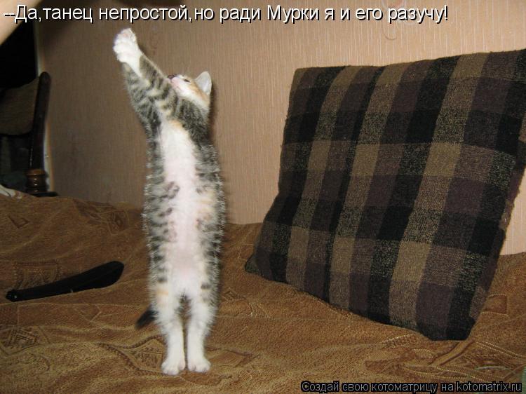 Котоматрица: --Да,танец непростой,но ради Мурки я и его разучу!