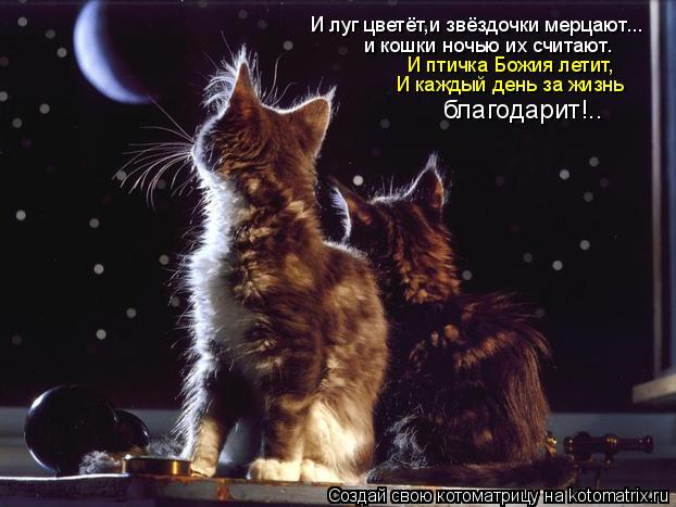 Котоматрица: И луг цветёт,и звёздочки мерцают... и кошки ночью их считают. И птичка Божия летит, И каждый день за жизнь  благодарит!..