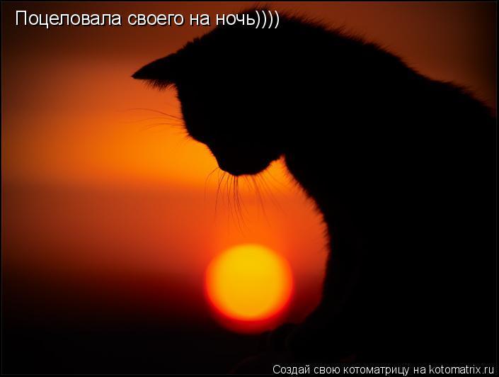 Котоматрица: Поцеловала своего на ночь))))