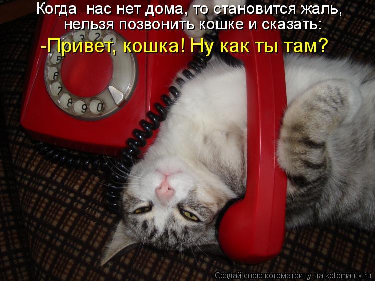 Котоматрица - Когда  нас нет дома, то становится жаль, нельзя позвонить кошке и сказ
