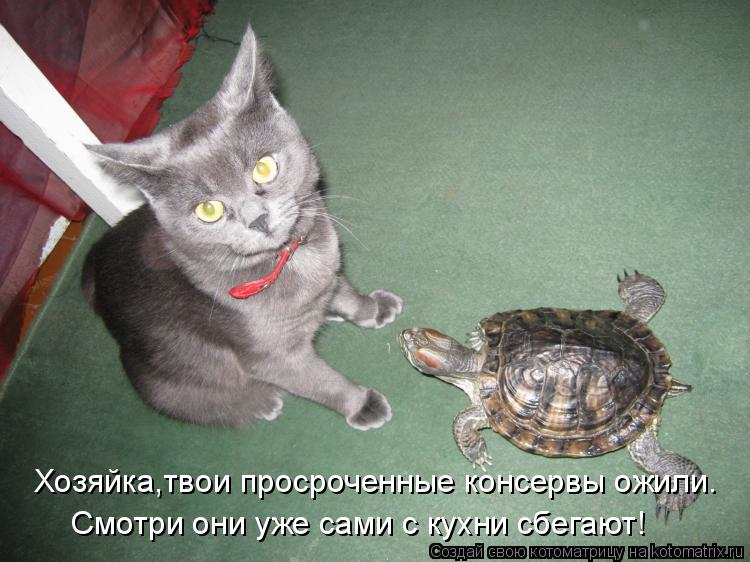 http://kotomatrix.ru/images/lolz/2011/05/16/908638.jpg