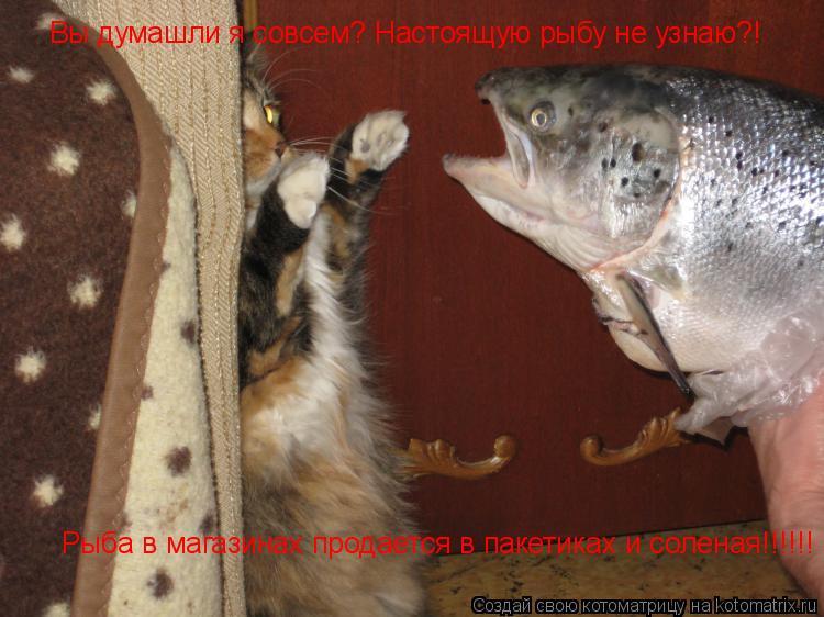Котоматрица: Вы думашли я совсем? Настоящую рыбу не узнаю?! Рыба в магазинах продается в пакетиках и соленая!!!!!!