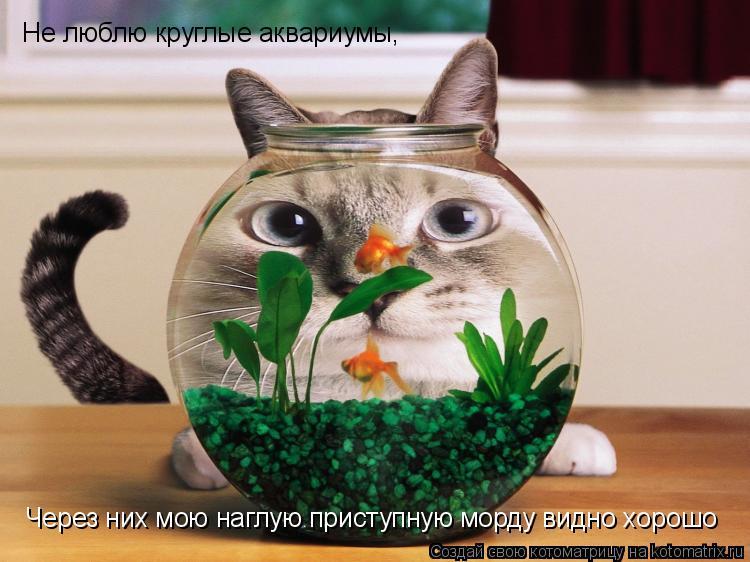 Котоматрица: Не люблю круглые аквариумы, Через них мою наглую приступную морду видно хорошо