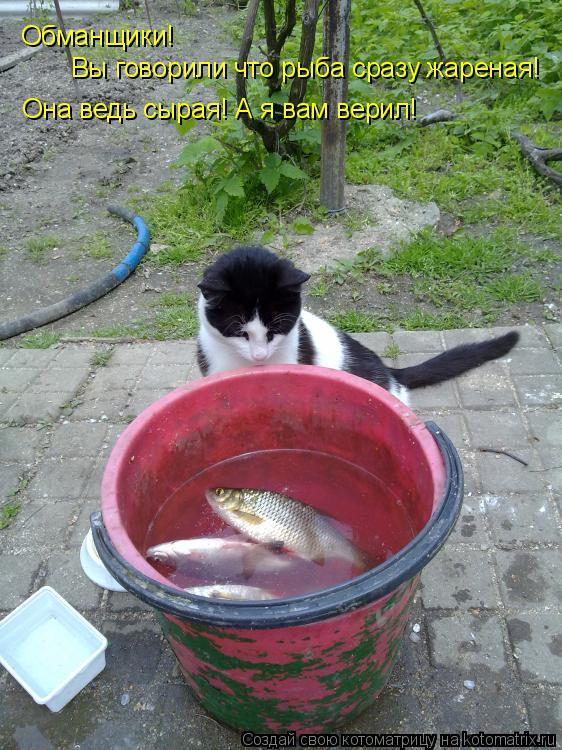 Котоматрица: Обманщики! Вы говорили что рыба сразу жареная! Она ведь сырая! А я вам верил!