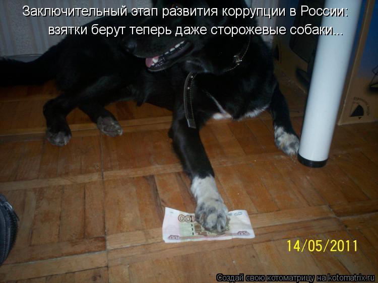 Котоматрица: взятки берут теперь даже сторожевые собаки... Заключительный этап развития коррупции в России: