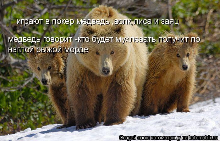 Котоматрица: играют в покер медведь ,волк,лиса и заяц медведь говорит -кто будет мухлевать получит по  наглой рыжой морде