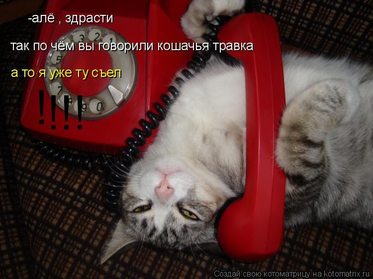Котоматрица: -алё , здрасти  так по чём вы говорили кошачья травка а то я уже ту съел ! !!!