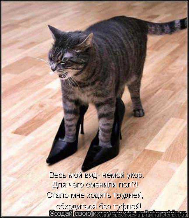 Котоматрица: Весь мой вид- немой укор. Для чего сменили пол?! Стало мне ходить трудней, обходиться без туфлей!