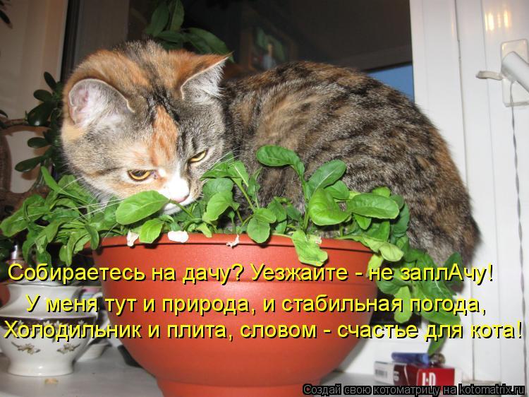 Котоматрица: Собираетесь на дачу? Уезжайте - не заплАчу!  Холодильник и плита, словом - счастье для кота! У меня тут и природа, и стабильная погода,