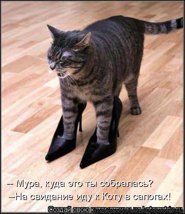 Котоматрица: -- Мура, куда это ты собралась? --На свидание иду к Коту в сапогах!