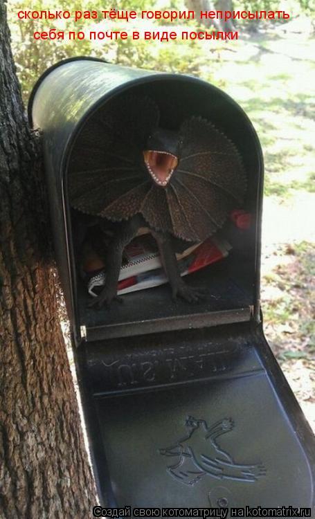 Котоматрица: сколько раз тёще говорил неприсылать себя по почте в виде посылки