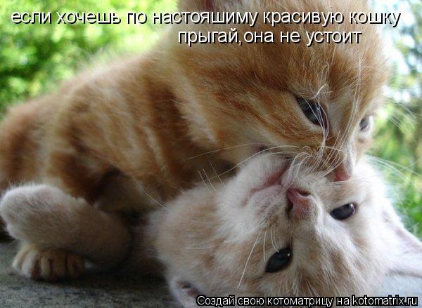 Котоматрица: если хочешь по настояшиму красивую кошку прыгай,она не устоит