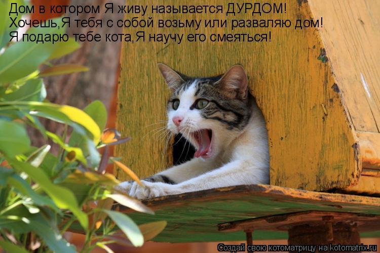 Котоматрица: Дом в котором Я живу называется ДУРДОМ! Хочешь,Я тебя с собой возьму или разваляю дом! Я подарю тебе кота,Я научу его смеяться!