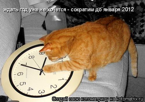 Котоматрица: ждать год уже не хочется - сократим до января 2012