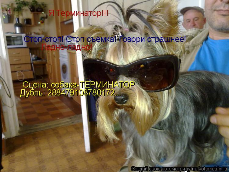 Котоматрица: Я Терминатор!!! Стоп-стоп! Стоп съёмка! Говори страшнее! Ладно-ладно!   Сцена: собака-ТЕРМИНАТОР Дубль: 288479108780172...