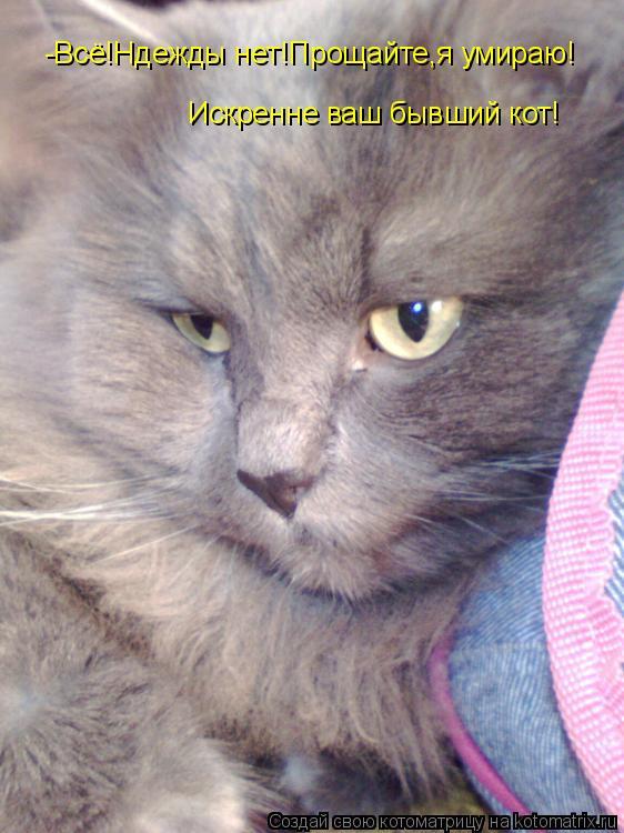 Котоматрица: -Всё!Ндежды нет!Прощайте,я умираю! Искренне ваш бывший кот!