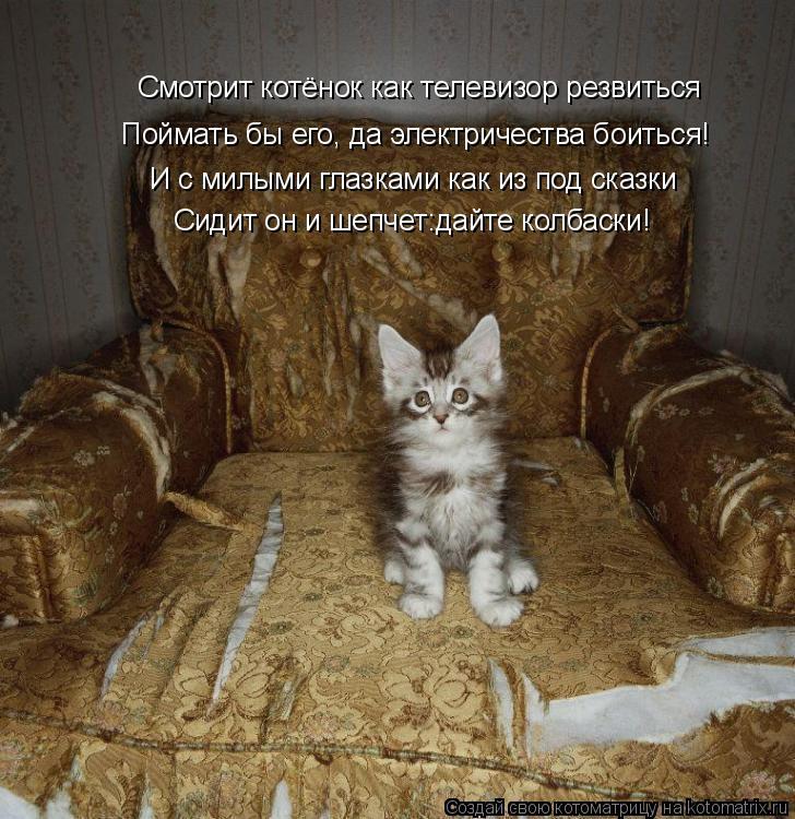 Котоматрица: Смотрит котёнок как телевизор резвиться Смотрит котёнок как телевизор резвиться Поймать бы его, да электричества боиться! И с милыми глазк