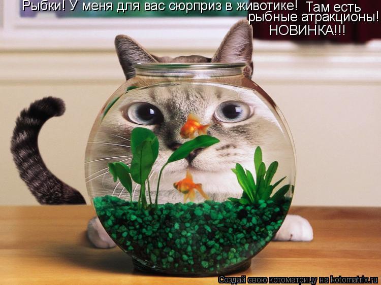 Котоматрица: Рыбки! У меня для вас сюрприз в животике! Там есть рыбные атракционы! НОВИНКА!!!