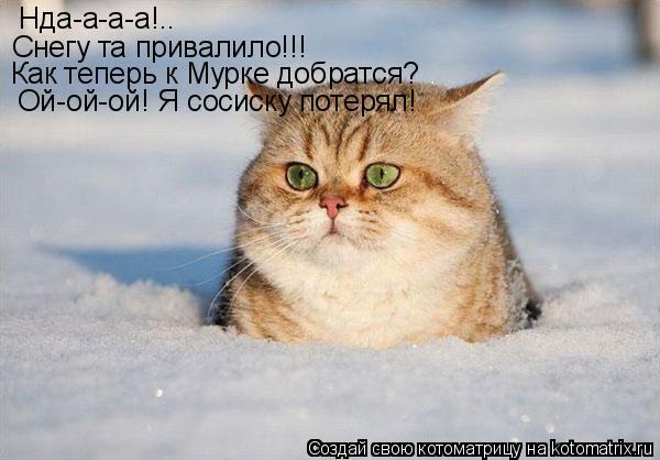 Котоматрица: Нда-а-а-а!.. Снегу та привалило!!! Как теперь к Мурке добратся? Ой-ой-ой! Я сосиску потерял!