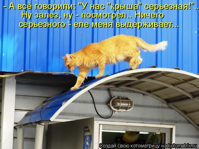 """Котоматрица: - А всё говорили: """"У нас """"крыша"""" серьезная!""""... Ну залез, ну - посмотрел.. Ничего  серьезного - еле меня выдерживает..."""
