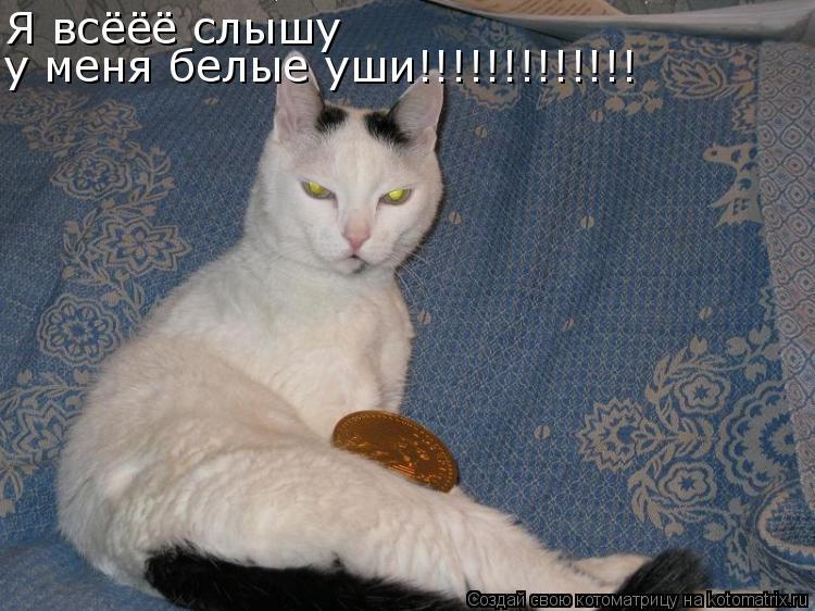 Котоматрица: Я всёёё слышу у меня белые уши!!!!!!!!!!!!!