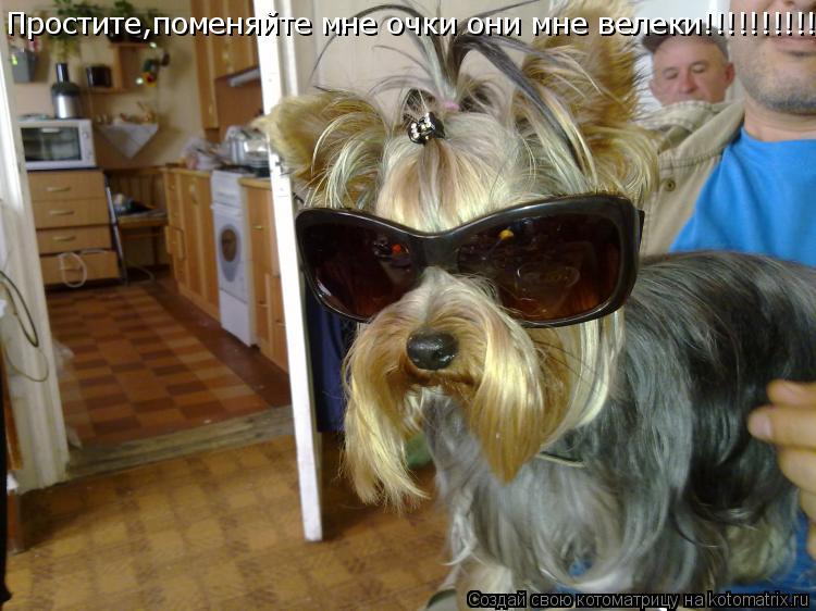 Котоматрица: Простите,поменяйте мне очки они мне велеки!!!!!!!!!!!!!