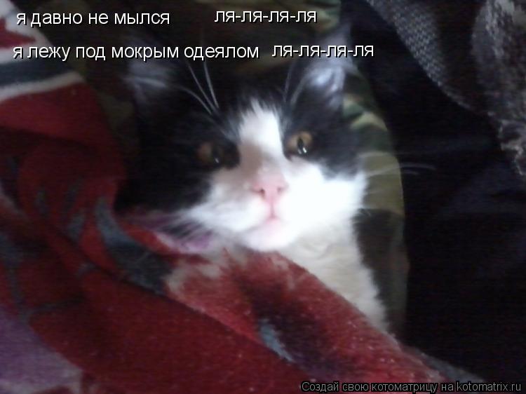 Котоматрица: я давно не мылся я лежу под мокрым одеялом ля-ля-ля-ля ля-ля-ля-ля