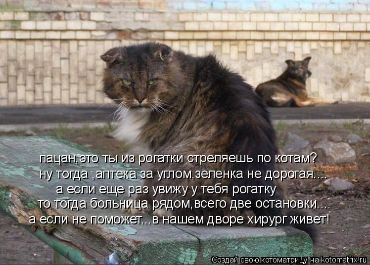 Котоматрица: пацан,это ты из рогатки стреляешь по котам? ну тогда ,аптека за углом,зеленка не дорогая.... а если еще раз увижу у тебя рогатку то тогда больн