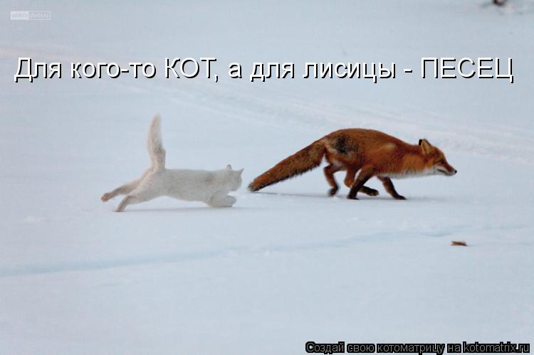 Котоматрица: Для кого-то КОТ, а для лисицы - ПЕСЕЦ