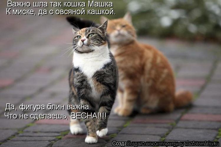 Котоматрица: Важно шла так кошка Машка К миске, да с овсяной кашкой. Да, фигура блин важна. Что не сделаешь, ВЕСНА!!!!
