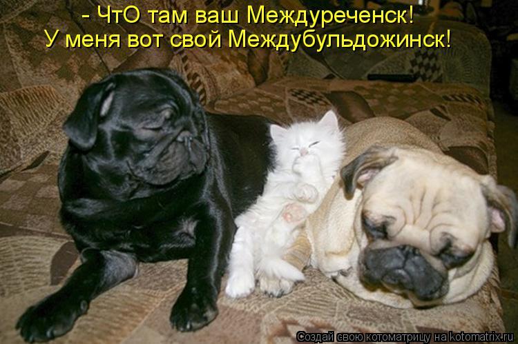 Котоматрица: - ЧтО там ваш Междуреченск! У меня вот свой Междубульдожинск!