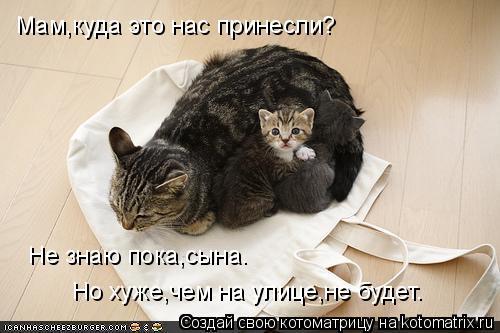 Котоматрица: Мам,куда это нас принесли? Не знаю пока,сына. Но хуже,чем на улице,не будет.