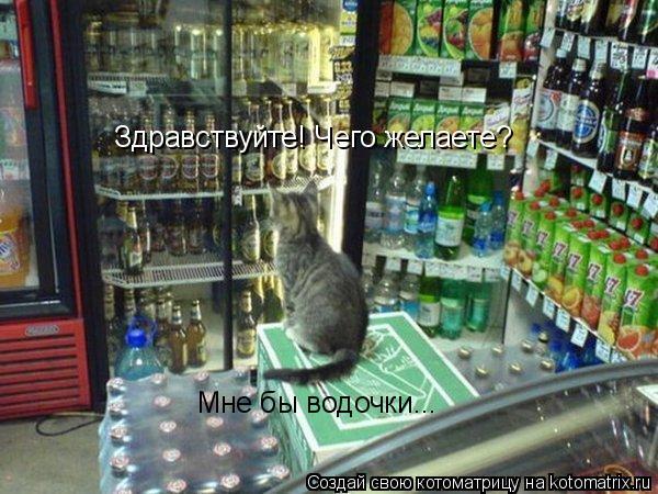 Котоматрица: Здравствуйте! Чего желаете? Мне бы водочки...