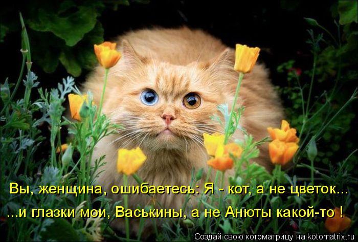 Котоматрица: Вы, женщина, ошибаетесь: Я - кот, а не цветок...  ...и глазки мои, Васькины, а не Анюты какой-то !