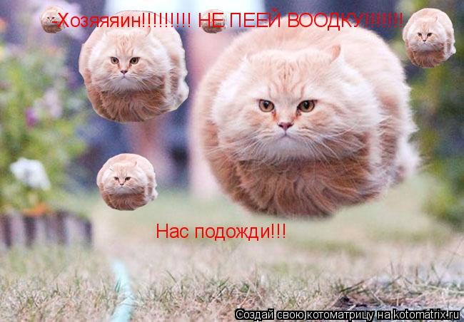 Котоматрица: -Хозяяяин!!!!!!!!! НЕ ПЕЕЙ ВООДКУ!!!!!!! Меняя подожди!! -Хозяяяин!!!!!!!!! НЕ ПЕЕЙ ВООДКУ!!!!!!! Нас подожди!!!