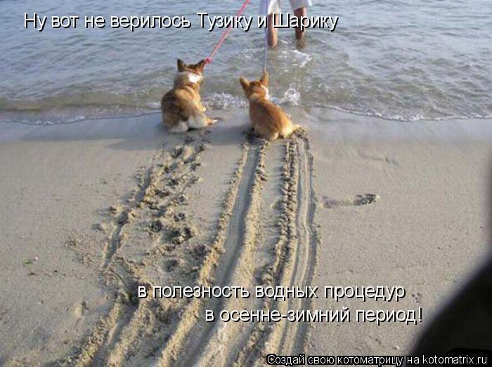 Котоматрица: Ну вот не верилось Тузику и Шарику  в полезность водных процедур в осенне-зимний период!