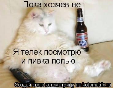 Котоматрица: Пока хозяев нет Я телек посмотрю  и пивка попью