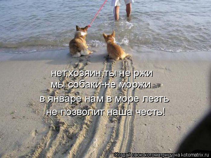 Котоматрица: нет,хозяин,ты не ржи мы собаки-не моржи в январе нам в море лезть не позволит наша честь!