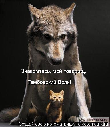 Котоматрица: Знакомтесь, мой товарищ,  Тамбовский Волк!