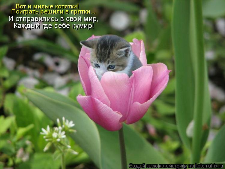Котоматрица: Вот и милые котятки! Поиграть решили в прятки... И отправились в свой мир, Каждый где себе кумир!