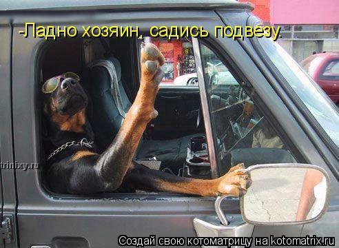 Котоматрица: -Ладно хозяин, садись подвезу.