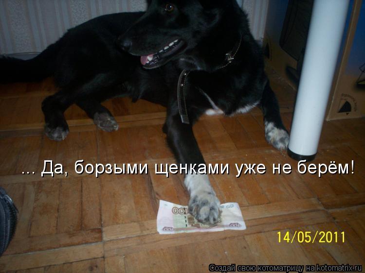 Котоматрица: ... Да, борзыми щенками уже не берём!